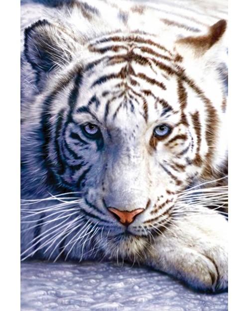 PP30282 White Tiger