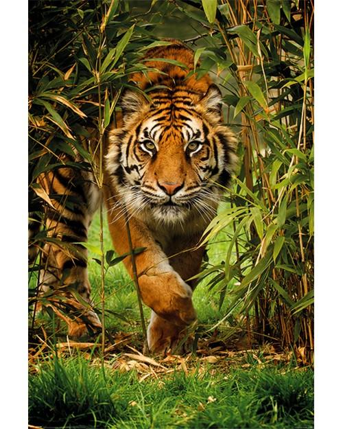 PP34091 Bamboo Tiger