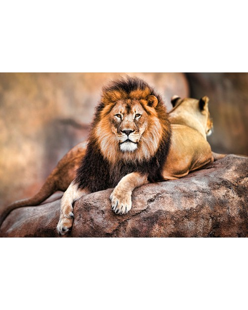 PP34092 King of the Pride